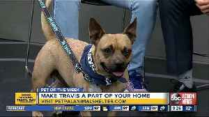 Pet of the week: Travis is a very social dog who loves receiving doggie treats [Video]