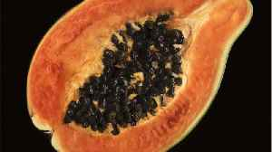 Salmonella Outbreak Connected To Papayas [Video]