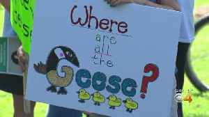 Neighbors Want City To Provide Forum About Controversial Geese Mitigation Program [Video]