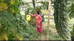 Drought in Nepal: Farmers struggle with lack of water [Video]