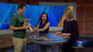 Wildlife Encounters introduces KETV to a coyote puppy and rose hair tarantula [Video]