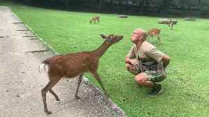 Deer-ly loved! Sacred animal gives man a kiss in Japanese park [Video]