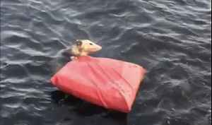 Michigan Couple Rescue Opossum From Lake [Video]