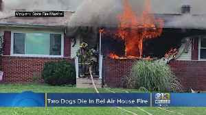 Bel Air House Fire Kills Two Dogs, Injures Cat [Video]