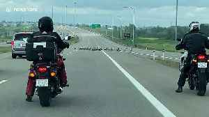 Motorists stop traffic allowing gaggle of geese to cross Canadian highway [Video]