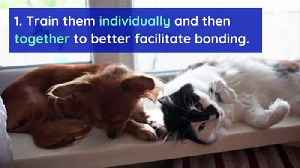 6 Tips to Help Dogs and Cats Get Along [Video]