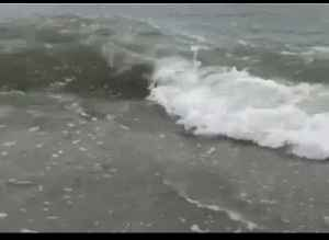 Shark Seen Swimming Within Meters of Shore at North Myrtle Beach [Video]
