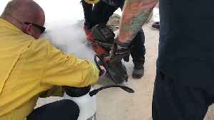 California Firefighters Rescue Dog Trapped Under Concrete Patio [Video]