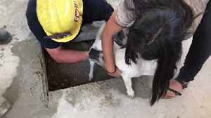 Dog rescued by firefighters after getting stuck underneath patio [Video]
