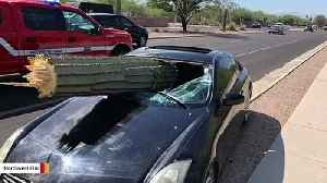 This Giant Cactus Crashed Through A Windshield In Arizona [Video]