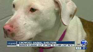 Lost your pet during the 4th of July? There's a deadline to claim them in the Front Range [Video]