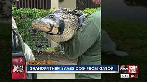 75-year-old Florida man fights off alligator, saves dog [Video]