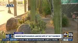 More sustainable landscape implemented at Sky Harbor [Video]