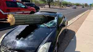 News video: This Giant Cactus Crashed Through A Windshield In Arizona