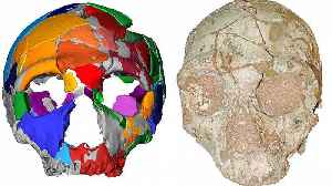 Partial skull found in Greece is Europe's oldest human fossil [Video]