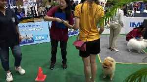Thailand International Dog Show determines who is the very best boy [Video]