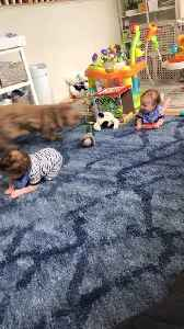 Twin Babies Enjoy Playtime with Labradoodle Dog [Video]