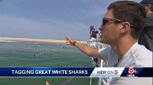 Getting up close with Great Whites [Video]
