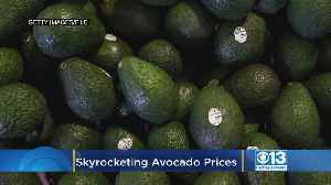 Avocado Shortage? Prices Are Skyrocketing On The Popular Fruit [Video]