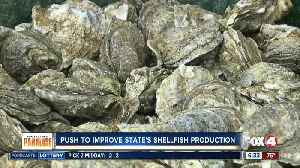 Oysters face double whammy with bacteria worries and Hurricane Michael woes [Video]