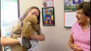 Delray Beach pet salon fighting to stay in business [Video]