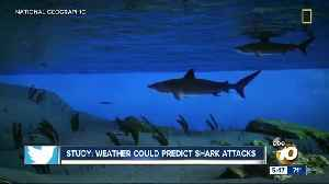 Study: Weather could predict shark attacks [Video]