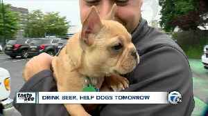 Meet adoptable rescue dogs at 'Chugs for Pugs' in Buffalo [Video]