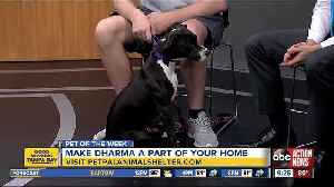 Pet of the week: Dharma enjoys doing dog yoga and playing with her toys [Video]