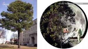'Moon Trees' May Grow in Your City From Seeds That Went to Space [Video]