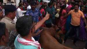 Stubborn bull wanders into crowd during Indian religious festival [Video]