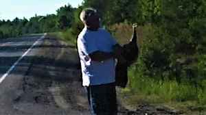 Motorist stops to help wild turkey, forms strong attachment [Video]