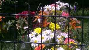 Michigan Church Puts Flowers in Cage to Protest Children Being Detained at Border [Video]