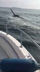 Man Sees Whale Breach and Leap Out of Water [Video]