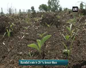 Farmers face acute water crisis in Maharashtra's Nagpur [Video]