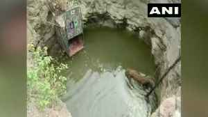 Caught on camera: 4-year-old leopard falls into well in Pune, rescued [Video]