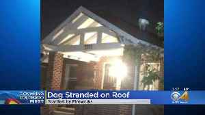 Firefighters Rescue Dog From Roof, Spooked By Fireworks [Video]