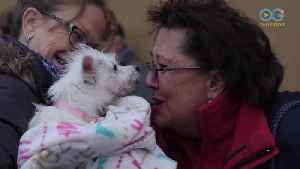 Emotional Stories From Pittsburgh Gotcha Day! - A Dog's Journey Home (E11) [Video]