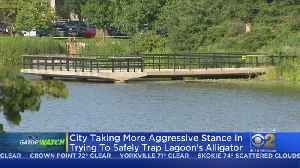 New Strategy For Trying To Catch Gator At Humboldt Park Lagoon [Video]