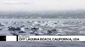 Large pod of over 100 dolphins surrounds boat in California [Video]