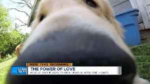 Local residents rescue golden retrievers from China meat trade [Video]