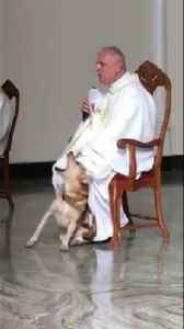 Lost dog crashes Sunday Mass, but Priest's perfect reaction has millions cheering [Video]