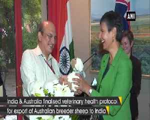 India finalises protocol for importing Australian breeder sheep [Video]