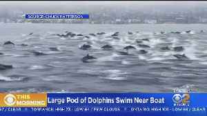 Caught On Video: Large Pod Of Dolphins Swim Alongside Boat [Video]