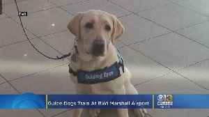 Future Guide Dogs Train At BWI Marshall Airport [Video]