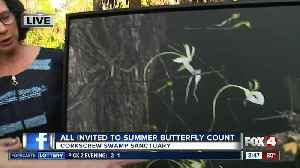 Butterfly count at Corkscrew Swamp Sanctuary 8:30 a.m. [Video]