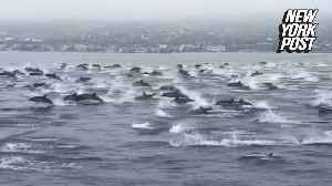 Mega pod of dolphins frolic alongside boat in Southern California [Video]