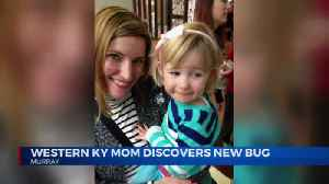 Kentucky toddler accidentally helps mom discover new bug species [Video]
