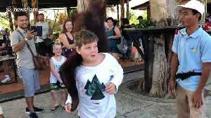 Adorable moment orangutan 'falls in love' with Australian boy at Indonesian zoo [Video]