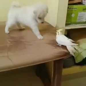 Puppy Pinching To White Parrot [Video]