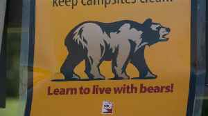 News video: Utah Rangers Issue Warning After Black Bear Allegedly Charges at Hikers